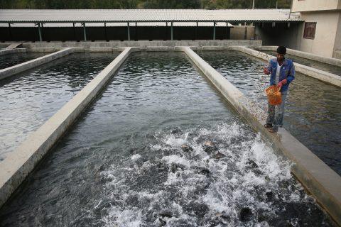 حوضچه پرورش ماهی
